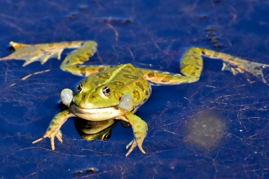 大量の外来種の処分はどうする?『緊急SOS!池の水ぜんぶ抜く大作戦』
